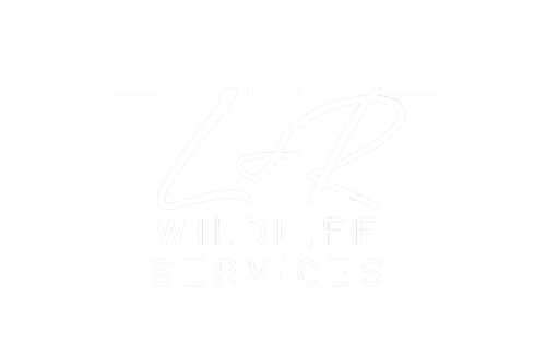Wildlife Removal Experts | L&R Wildlife Services | Contact Wildlife Removal Lisa Ricigliano | Learn About Polk Pest Removal