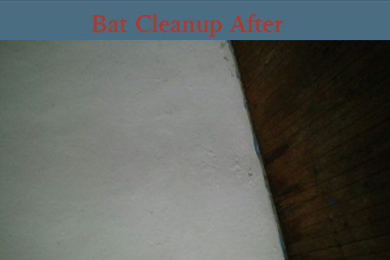 Batcleanupafter3