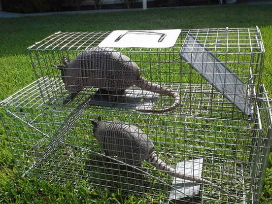 Nuisance Wildlife Trapping | Wildlife Removal Services | Lakeland, FL