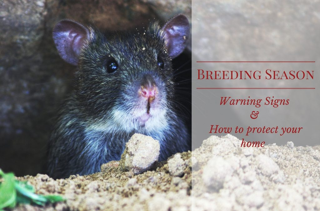 Breeding Season - Warning Signs - Wildlife Removal Experts