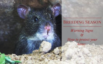 Breeding Season – Warning Signs & How to Protect Your Home