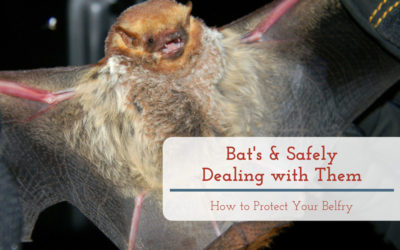 Bats & Safely Dealing with Them: How to Protect Your Belfry