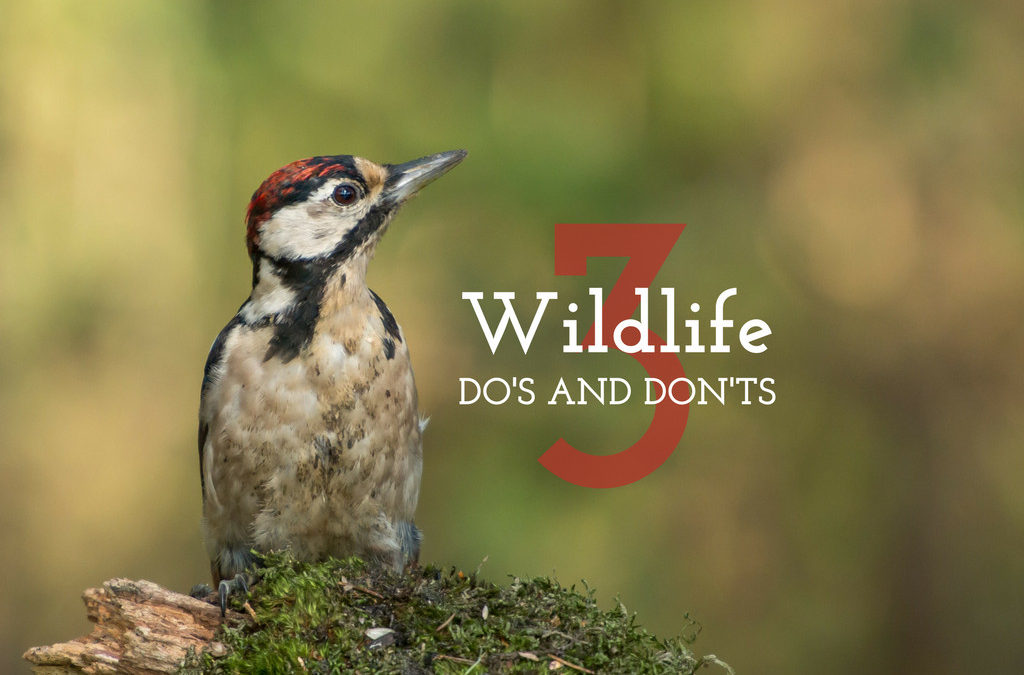 "Three Wildlife ""Do's and Don'ts"""