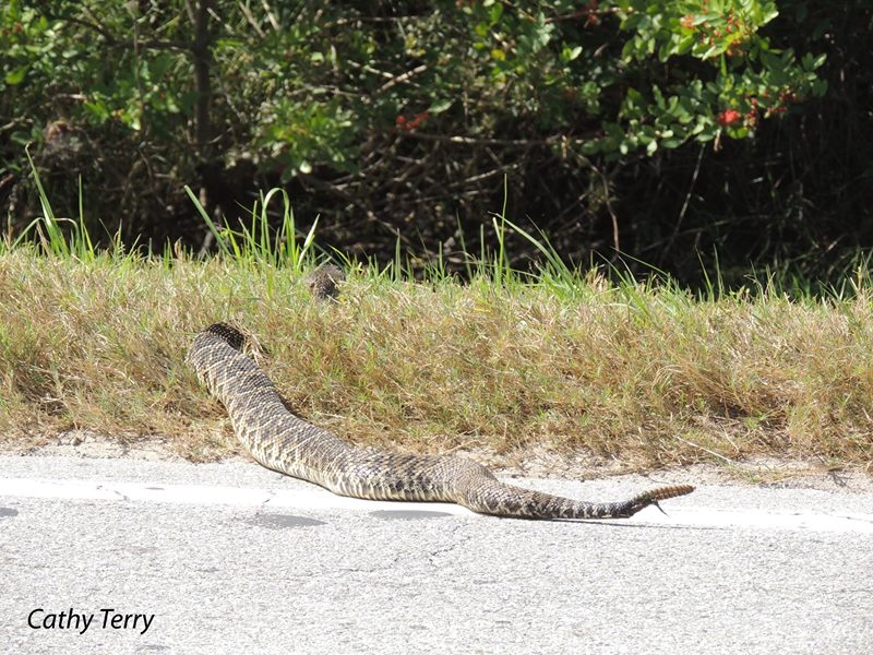 Rattlesnake Removal? Wildlife Removal Expert Lisa in the News Again