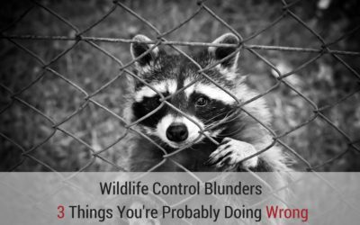 Wildlife Control Blunders: 3 Things You're Probably Doing Wrong