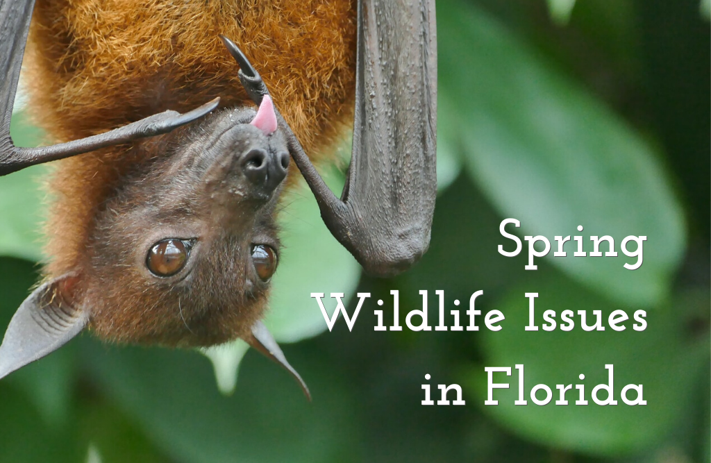 Spring Wildlife Issues in Florida